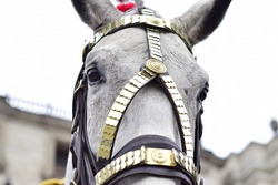 horse on a patriotic event