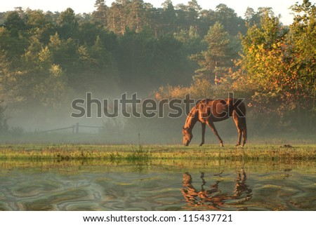horse on fog meadow in morning reflected in the water