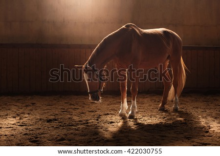 Horse on nature,  stands in the paddock