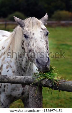 Horse on pasture in autumn #1526974151