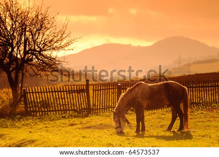 Horse on pasture in evening glow. Soft focus