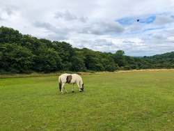 Horse on summer rural landscape a panorama with a field and the blue sky. agriculture Epping Forest, London field and the blue sky. Epping Forest, London. High quality photo