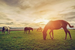 Horse on the field grass with noise and soft focus vintage tone