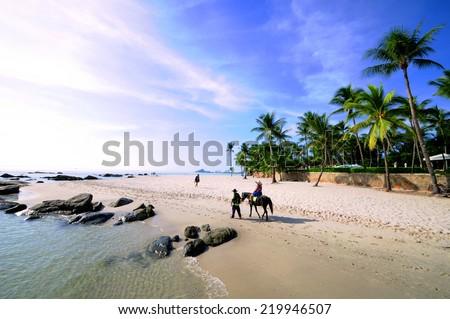 Horse on the Hua Hin beach Thailand.