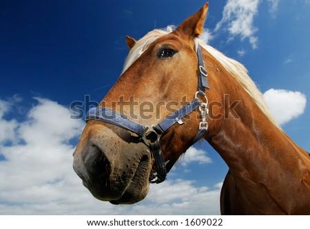 Horse on the island Neuwerk, germany