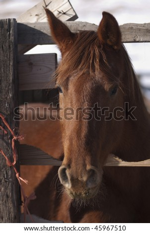 horse on Wyoming ranch