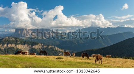 Horse over Dolomite landscape Geisler or Odle mountain Dolomites Group, Val di Funes, tourist region of Italy #1313942645