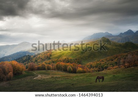 horse pasturing on a mountain pasture in autumn #1464394013