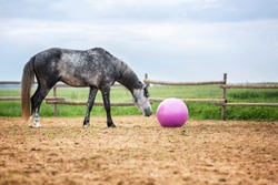 Horse playing with a ball