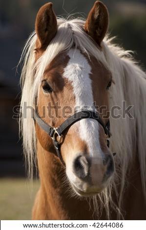 stock-photo-horse-portrait-42644086.jpg