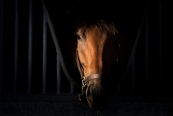Horse portrait on dark background inside stable