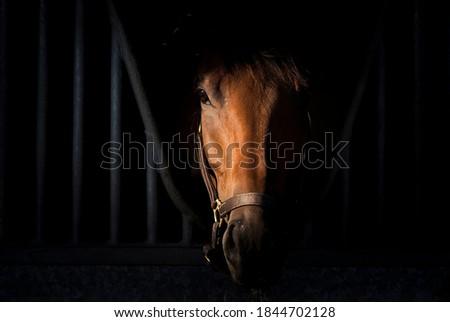 Horse portrait on dark background inside stable Foto stock ©