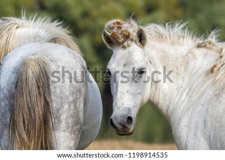 Horse portrait with dry burs from burdock plant in mane