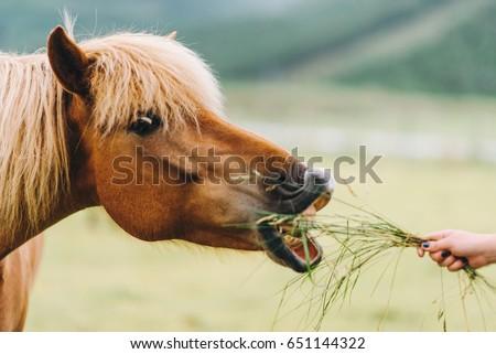 Horse profile. Horse portrait #651144322