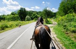 Horse pulls on an asphalt road in TRANSILVANIA, ROMANIA, Europe