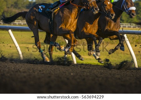 Horse Race colorful bright sunlit slow shutter speed motion effect fast moving thoroughbreds #563694229