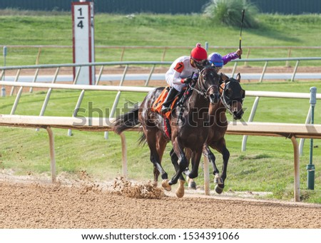 Horse racing at the race tracks #1534391066