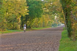Horse rider in the forest of Chantilly, France.