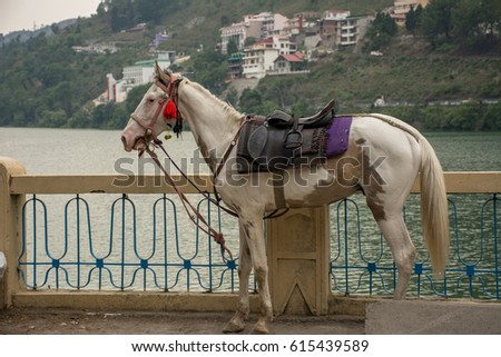Horse Riding at Bhimtal, Uttarakhand