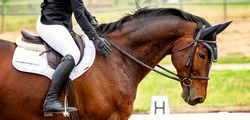 Horse riding dressage banner for website. Equestrian competition show green outdoor trees background.