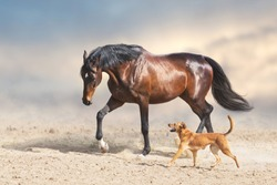 Horse run and play with dog in desert dust