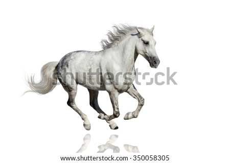 Horse run isolated on white background