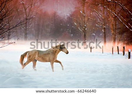Horse running in the snow.