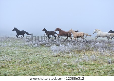 Horse runs gallop on the fog field