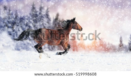 stock photo horse runs gallop on the winter field 519998608 - Каталог — Фотообои «Животные»