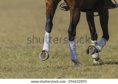 Horse Shoe\ Horse pony leg metal shoes closeup abstract animal detail.