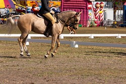 Horse showing off his paces in a dressage event against the background of a funfair.