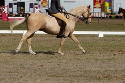 Horse showing off his paces in a horse dressage event against the background of a funfair.