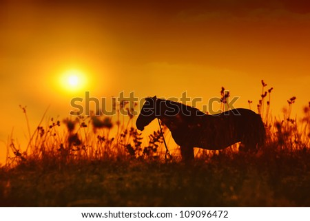 Horse silhouette at orange sunset