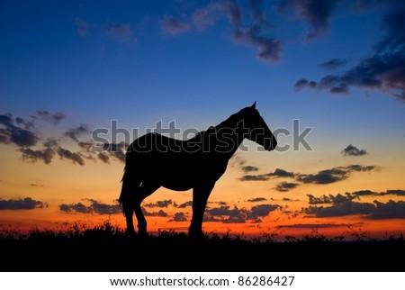 horse silhouette by a dawn
