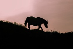 Horse silhouette going down hill