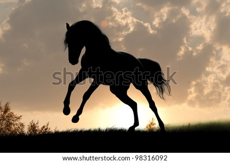 horse silhouette in the sunrise