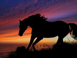 Horse Silhouette Sunset