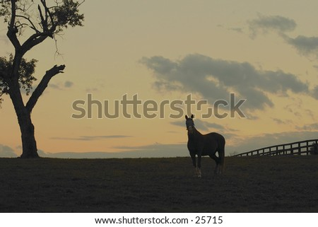 Horse silhouette(with a little detail in horse) at sunset.