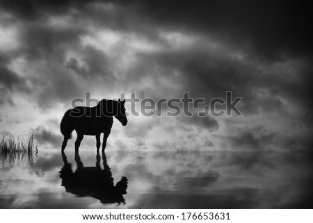 stock-photo-horse-silhouetted-against-su