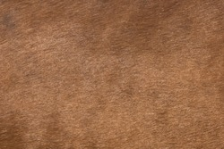Horse skin and mane, background texture for design