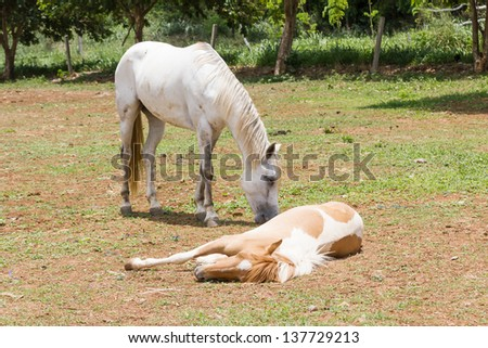 horse sleeping on the ground  in farm