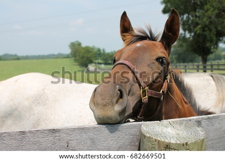Horse smiling #682669501
