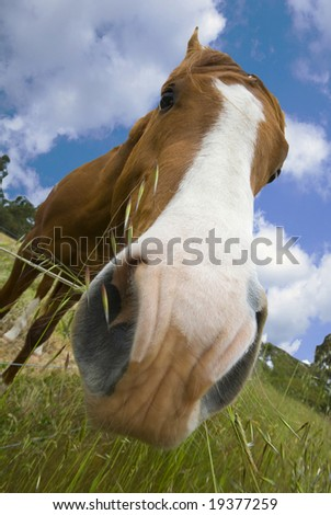 Horse Standing in field eating grass over fence