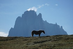 Horse standing in front of a steep mountain on a meadow. Beautiful scenery in the dolomites, Italy.