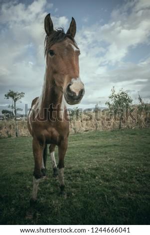 Horse Staring at Camera  #1244666041