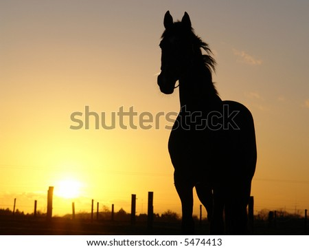Horse sunset silhouette