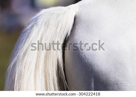 Horse Tail White\ Horse animal grooming closeup white tail  leg