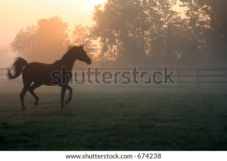 Horse Trotting in Fog