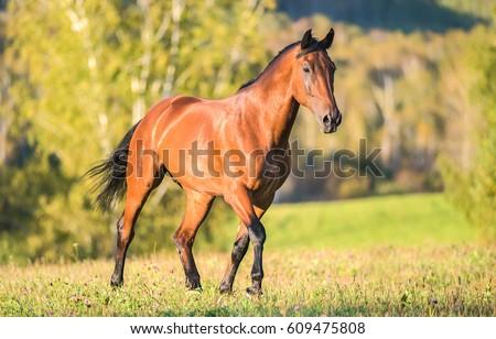 Horse walking in field
