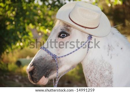 Horse Wearing Cowboy Hat